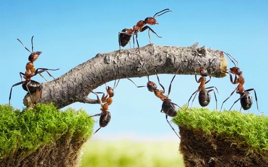 Teamwork Examples… | Team Member Day